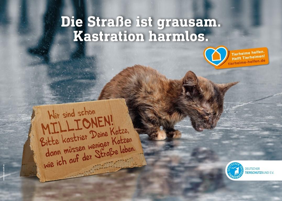 Der Deutsche Tierschutzbund macht mit einer neuen Kampagne auf das Leid der Straßenkatzen in Deutschland aufmerksam.