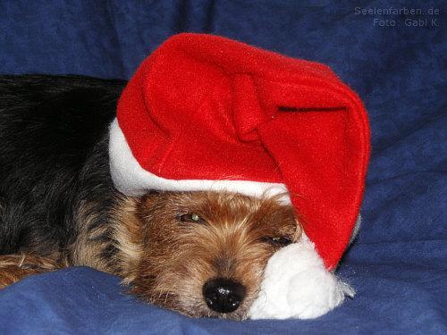 Seelenfarben Weihnachten.Weihnachtsgrüße Für Unser Tierheim