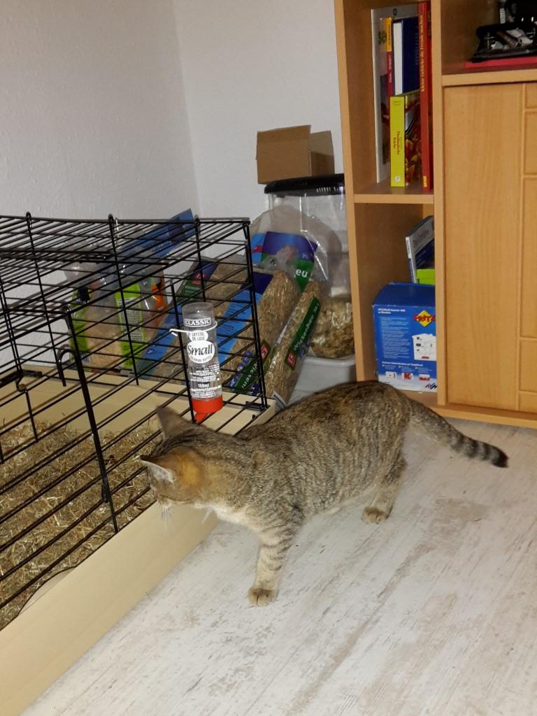 tigra_new_home-1